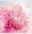asters and chrysanthemums background vector image