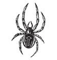 Spider vintage engraving vector image vector image