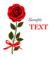 red rose with bow and ribbons vector image vector image