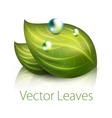 ecology leaves vector image vector image