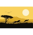 africa wild life hunting vector image