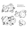 Ink champignon mushrooms sketches set vector image