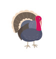 turkey flat isolated on white vector image