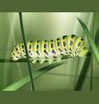 green machaon caterpillar vector image