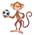 monkey with a soccer ball vector image