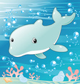 Baby Dolphin vector image