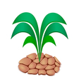 Lush Plant Grow out of Drought Soil vector image