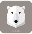Animal Portrait With Flat Design Polar Bear vector image