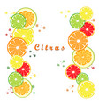 the set citrus vector image