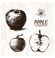 digital detailed apple hand drawn vector image