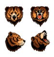 colored isolated bear heads vector image