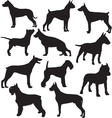 Set of sillhouttes of standing working dogs vector image