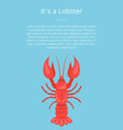 its a lobster poster with red crayfish vector image