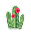 Cleistocactus isolated on white vector image vector image