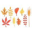 simple flat autumn leaves set vector image