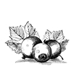 Currant graphics on a white background vector image