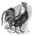 Rooster vintage engraving vector