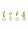Set of Pedilanthus Tithymaloides in A Flower Pot vector image vector image