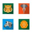 tiger lion elephant zebra realistic animals vector image