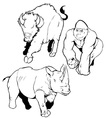 dangerous wild animal vector image