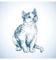 Cute cat sketch vector image
