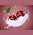 juicy sweet cherry in milk splash vector image