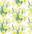 Seamless pattern lush yellow daffodils on white vector image