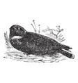 Spotted Nightjar vintage engraving vector image vector image