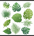 trendy summer tropical palm leaves jungle leaves 3 vector image