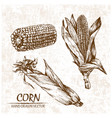 digital detailed corn hand drawn vector image