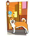 japanese dog on the city street vector image
