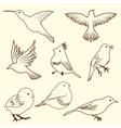 set of differnet sketch bird for design use vector image