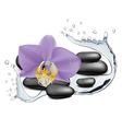 Orchid flower water splash and zen stone vector image