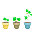 Three Green Eggplant Tree in Clay Pots vector image vector image