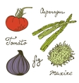 Colorful set of fresh handdrawn vegetables vector image vector image