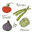 Colorful set of fresh handdrawn vegetables vector image