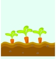 Three carrots grow in the ground vector image