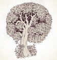 Magic old tree with big magnificent crown vector image vector image