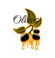 olive fruit and oil drop sign for food design vector image