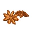 Anise star colored botanical vector image