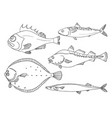 set fish line vector image