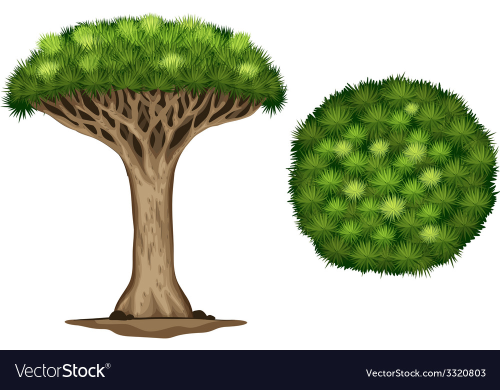 A blood dragon tree vector