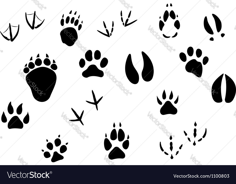 Animal footprints and tracks vector
