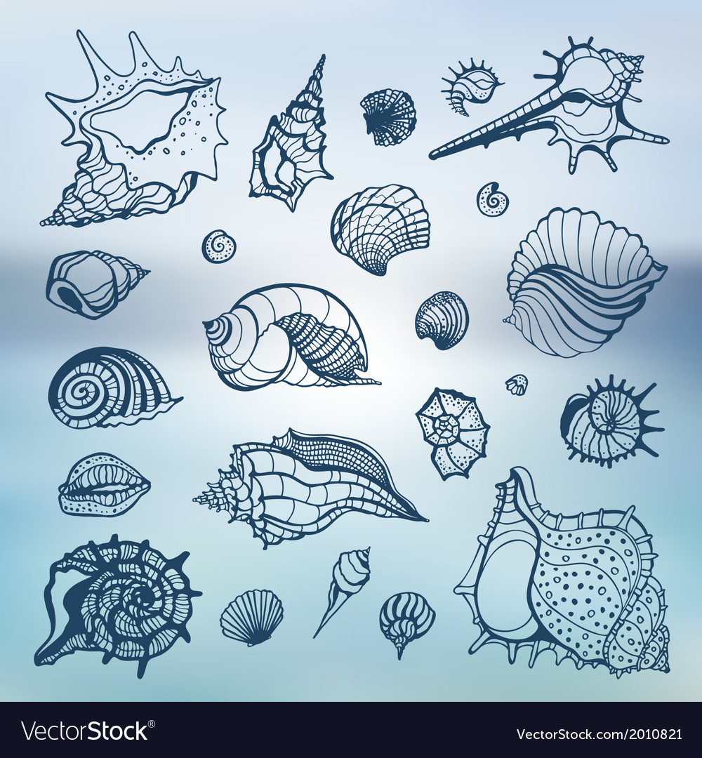 Sea shells set blurred background vector