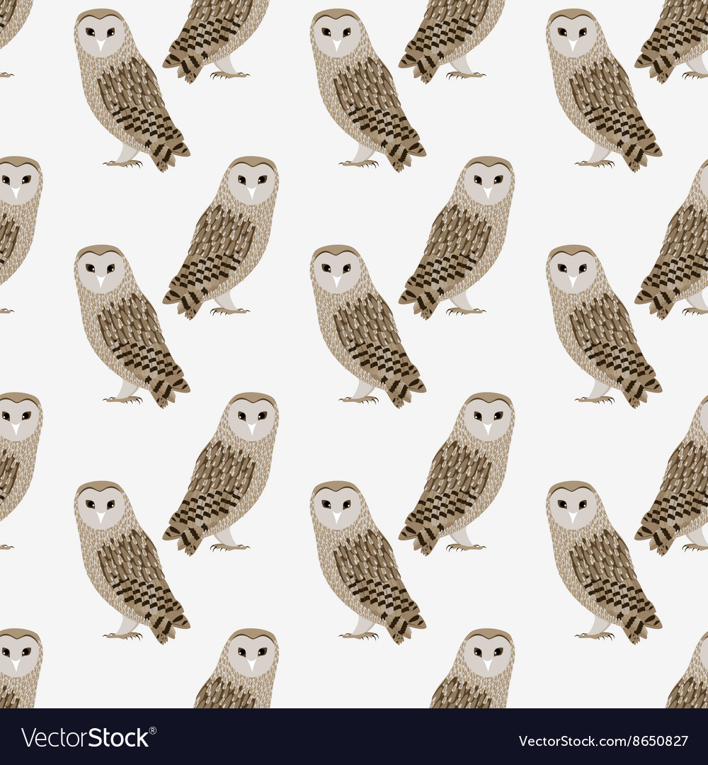 Pattern of barn owl vector