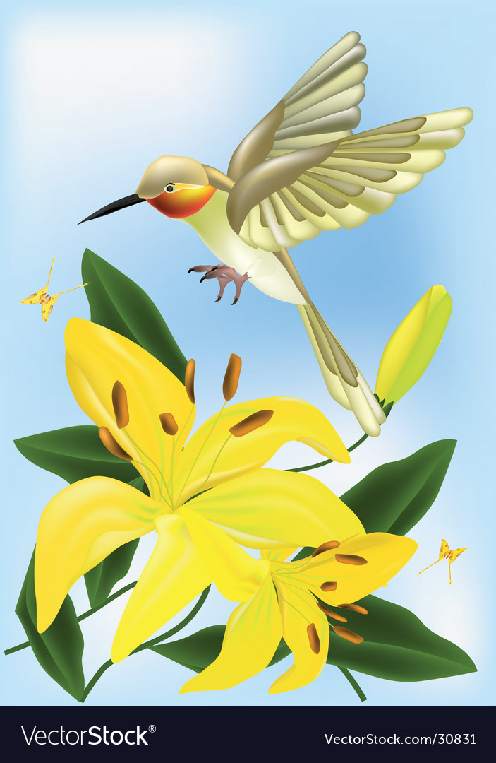 Hummingbird and lilies vector