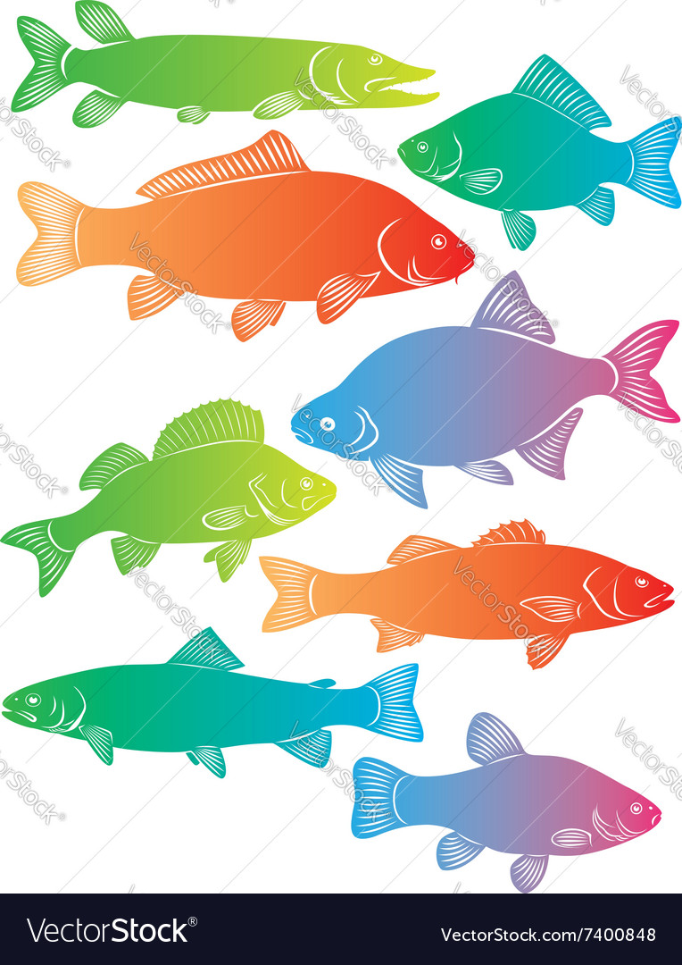 River fish vector