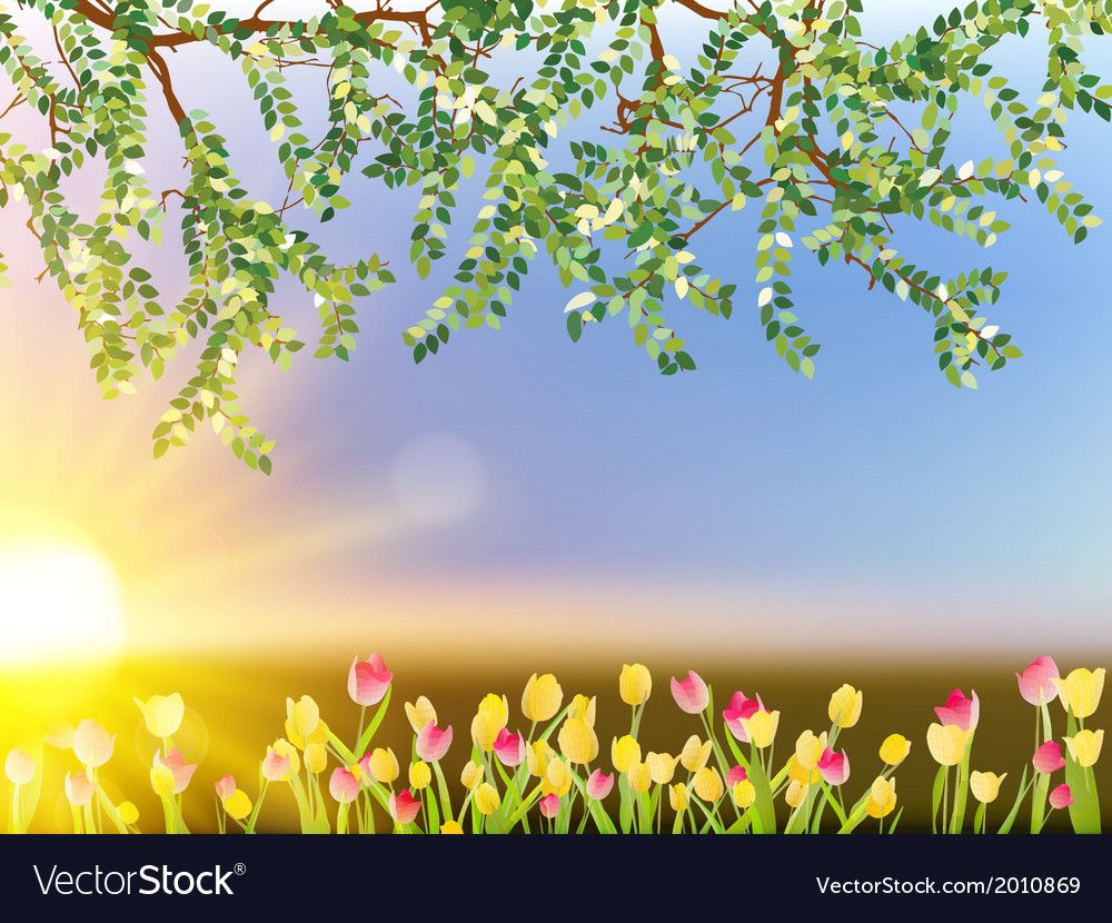 Tulip flowers on sky background eps 10 vector