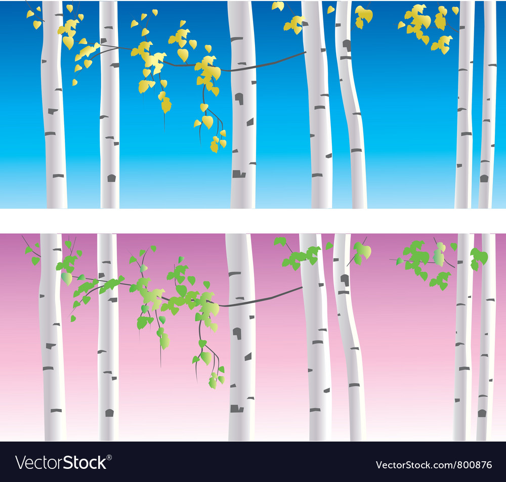 Birches vector