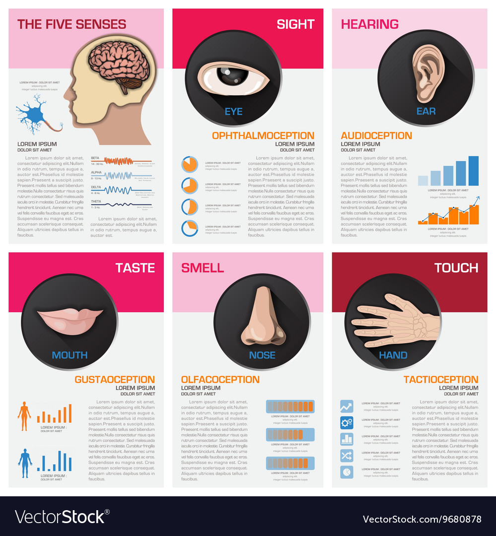 Five senses chart diagram infographic vector